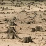 Cellulari: ecco come sono utili contro la deforestazione