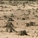 Riscaldamento globale, conversione di foreste in terreni coltivati lo rallenta