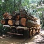 Deforestazione in Amazzonia fa un'altra vittima: la biodiversità dei microbi