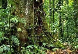L'asteroide di Chicxulub causò l'estinzione dei dinosauri e modificò le foreste pluviali