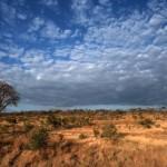 Davos, deforestazione e consumo del suolo: previsioni apocalittiche, a meno che…