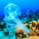 Rifiuti di plastica nell'oceano: veicoli per le infezioni del corallo