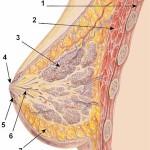 Tumore al seno e alle ovaie: possibile nuovo test low cost
