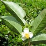 Cura il cancro al colon con erbe, semi e frutta